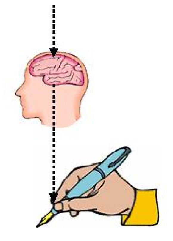 handwriting and brain